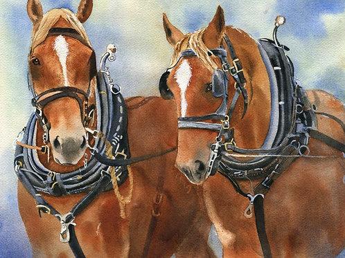 """""""Suffolk Punch"""" Draft Horse Giclée"""
