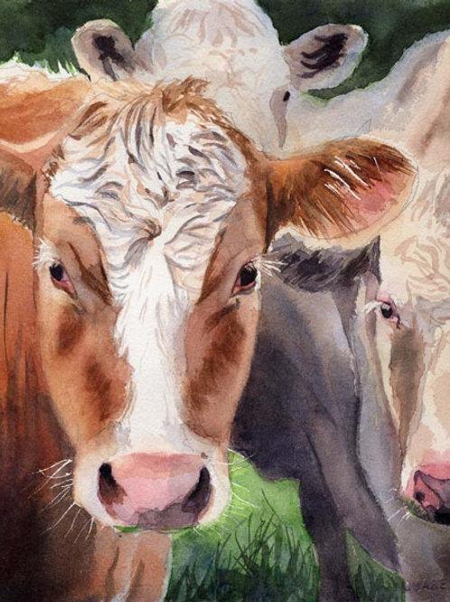 """Cows in Arrangement"" Giclée"