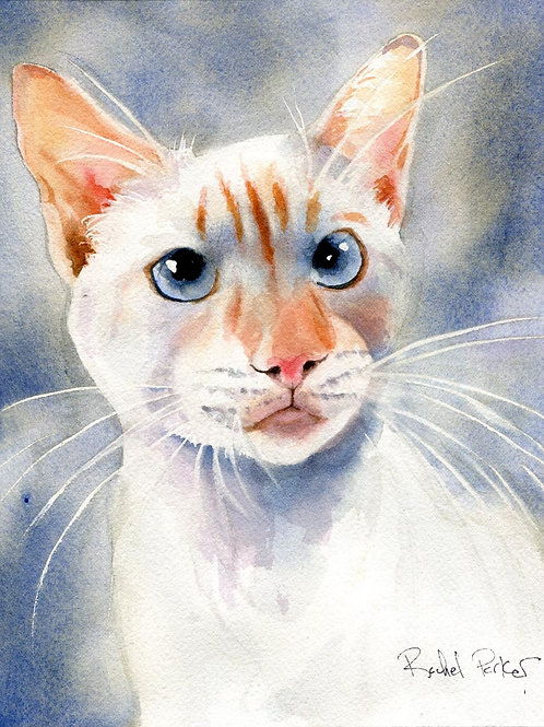 """Flame Point"" Siamese Cat Giclée"