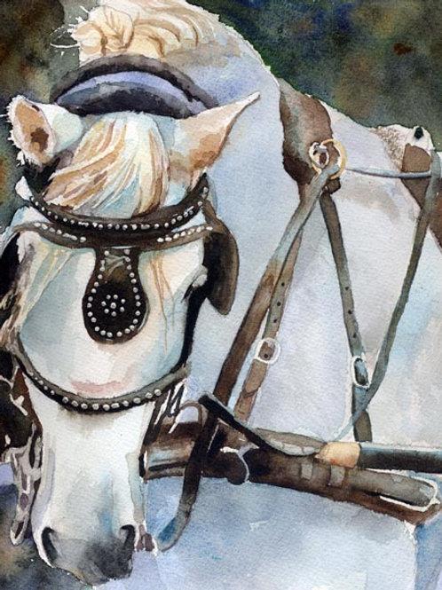 """Percheron in Charleston"" Draft Horse Giclée"