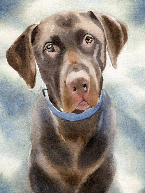 """Chocolate Labrador Retriever"" Giclée"