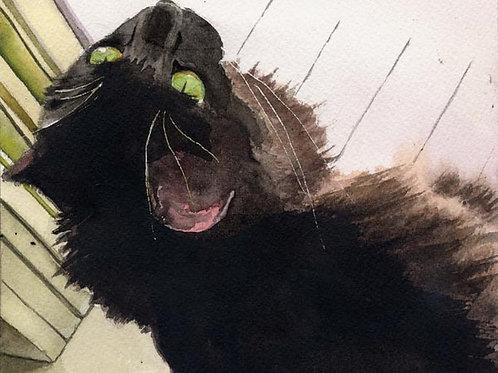 """Window Treatment"" Black Cat Giclée"