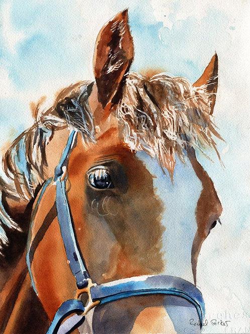 """Palomino in Blue Halter"" 11x14"" Watercolor"