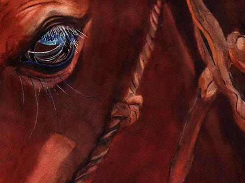 """Sorrel Eyes"" Horse Giclée"