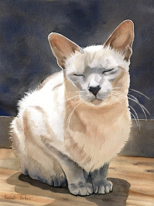 """""""Peaceful Kitty"""" Tonkinese or Siamese Cat Giclée"""