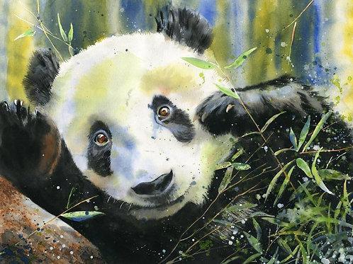 """""""Panda Portrait"""" Giclée"""