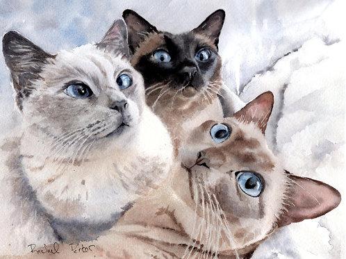 """Tonkinese Trio"" Cat art Print Giclée"