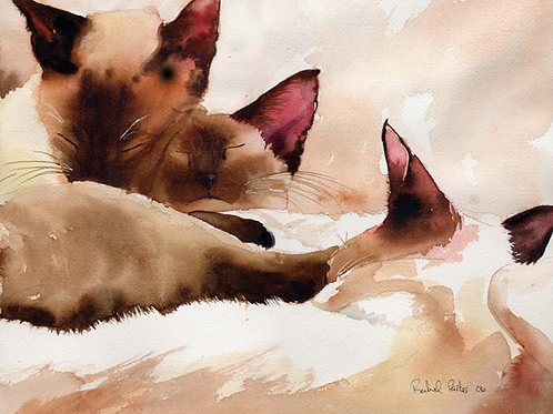 """Sound Asleep"" Siamese Cat Giclée"
