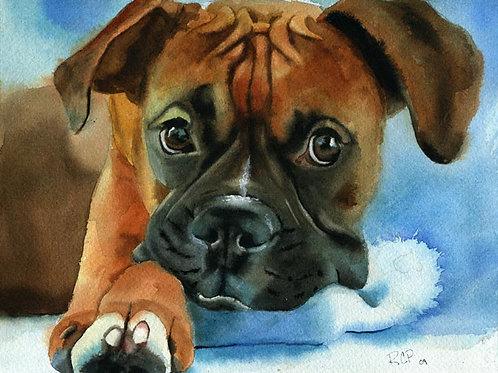 """Boxer Puppy"" Giclée"