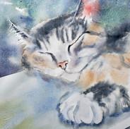 Calico Cat Loose