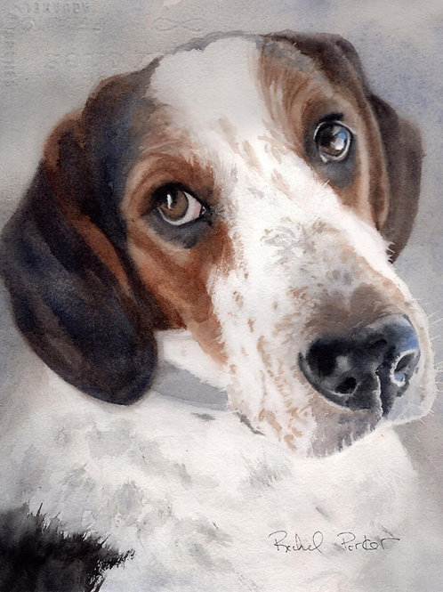 """""""Coon Hound Portrait"""" Giclée Art Print"""
