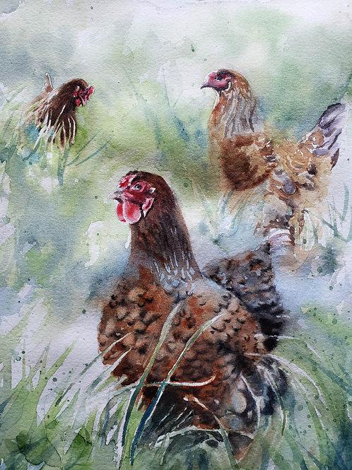 """""""Girl Gathering"""" Chicken  Giclée Art Print"""