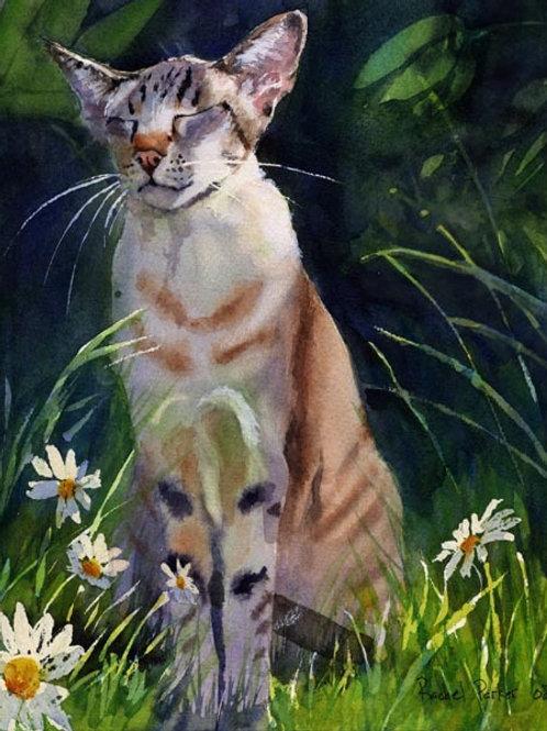 """""""Zen Kennedy"""" Giclée Tabby Oriental Shorthair Siamese Portrait"""