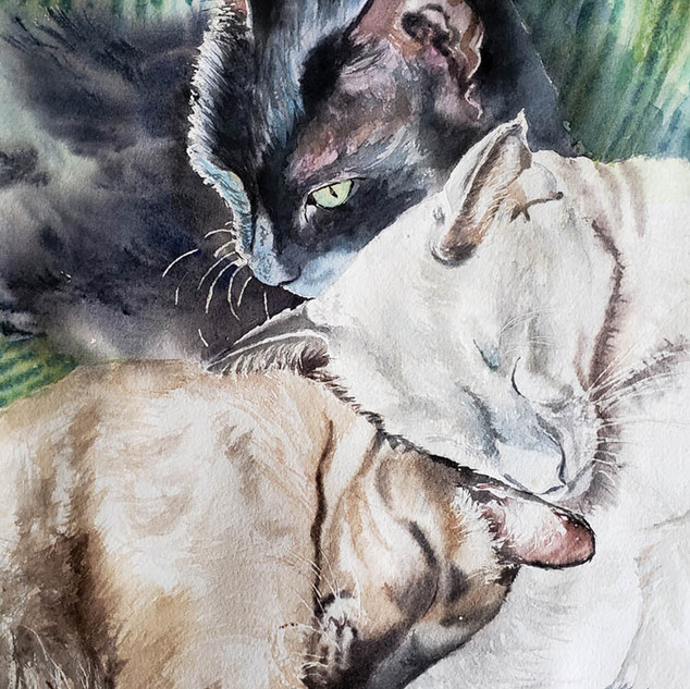 Three Siamese
