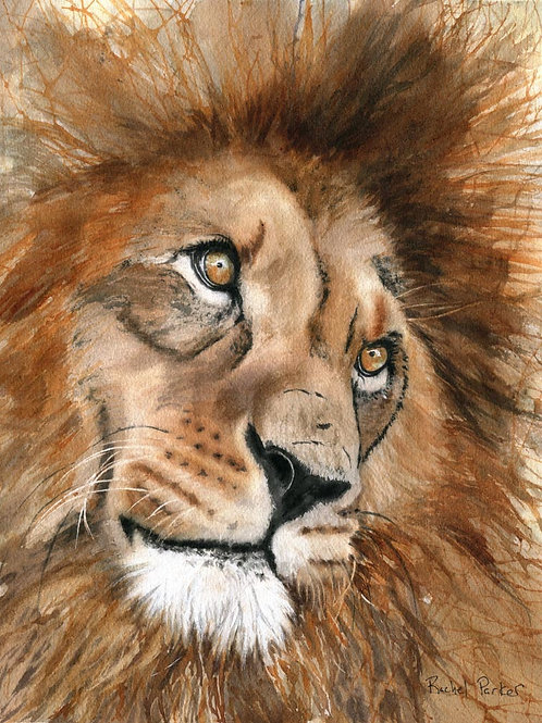 """Lion Love"" Wildlife Africa Art Giclée"