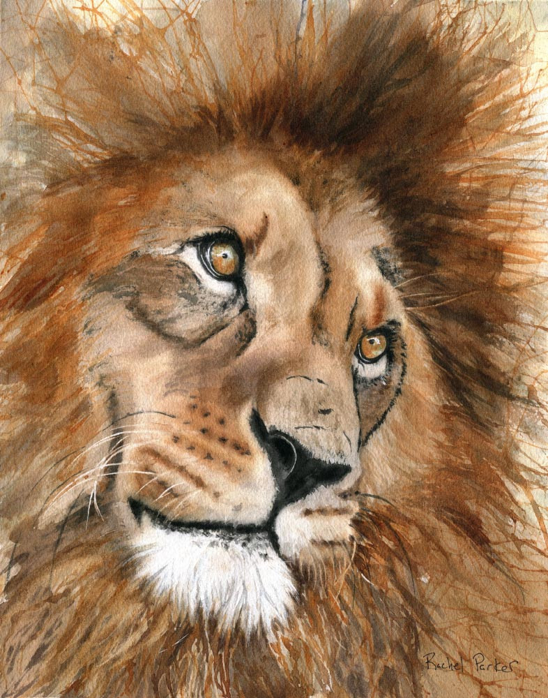 This is a watercolor painting of a male lion.  It is lion art for sale.
