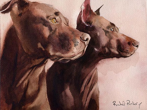 """Pit Bull Morning"" Giclée"