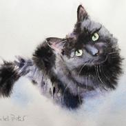 Black Cat Wet in Wet
