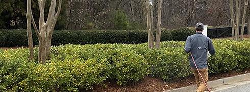 Tree and shrub.jpg