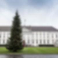 Weihnachtsbäume_HofOelkers