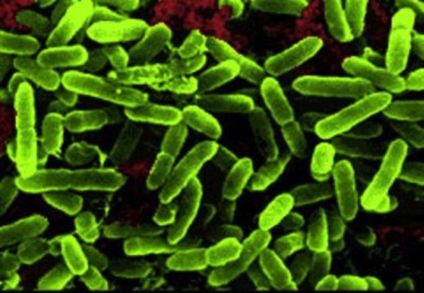 OptiBiotic Probiotic