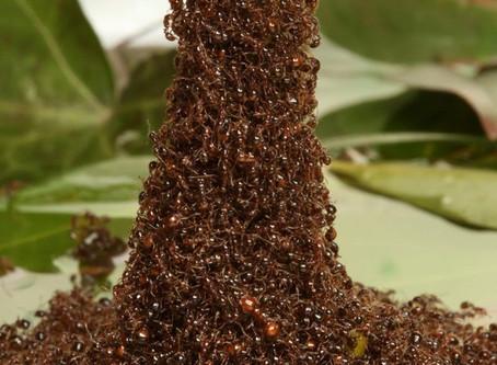Leading Like Ants.. Powerful!