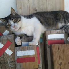 Pensao das Dunas Cat