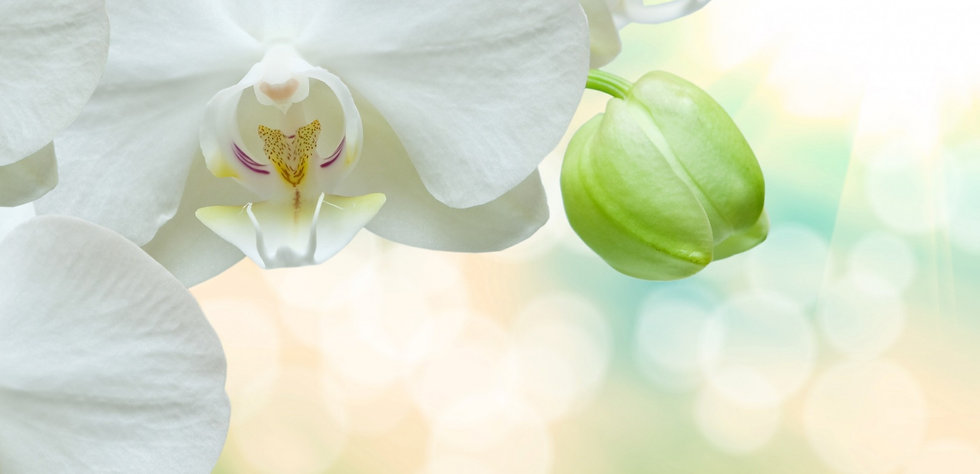 white-orchids-tropical-flowers-white-flo