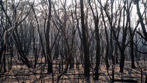 Australian 2019 Bushfires, Blue Mountains