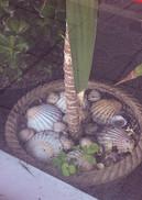 Takeaway Shells