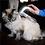 Thumbnail: Pet Beauty Tools Hair Fur Remover Shedd Grooming Brush Comb Vacuum Cleaner