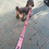 Thumbnail: 160x3.5cm Long Nylon Dog Leashes Collar Pet Puppy Training Straps Dogs Lead Rope