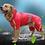 Thumbnail: Dog Raincoat Pet Supplies Fashion Designed Hooded Large Size Dog Raincoat Puppy