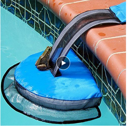 Animal Saving Escape Ramp for Pool