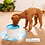 Thumbnail: 1.6L Automatic Cat Water Fountain Electric Mute Water Feeder Dog Pet Drinker Bow