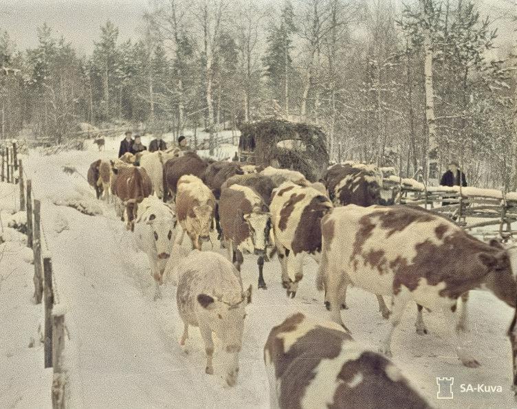Talvinen evakkotie
