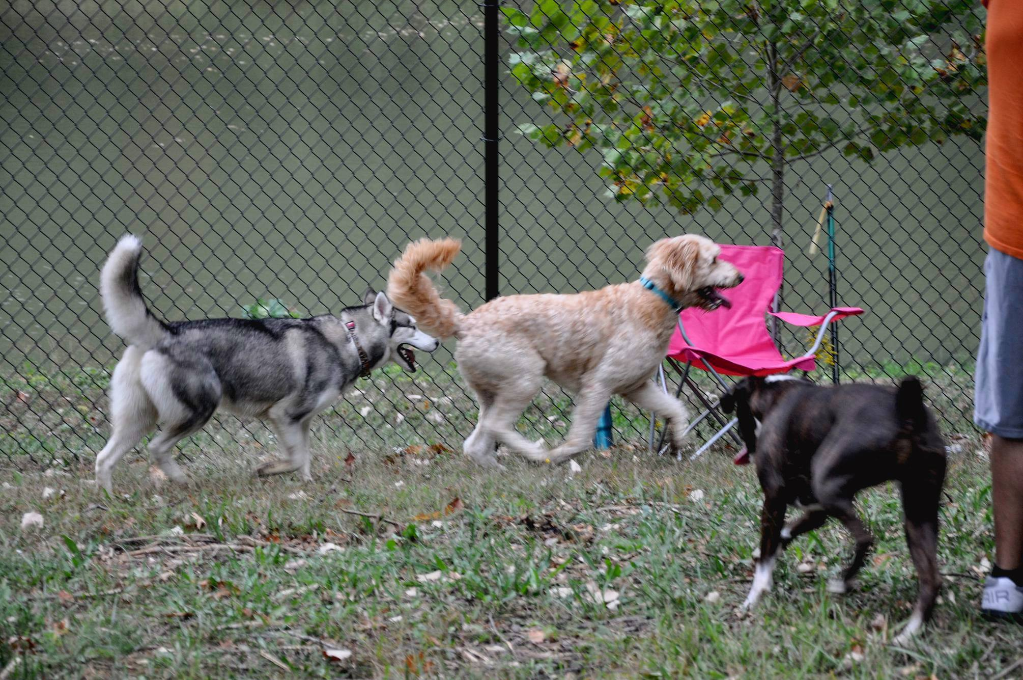 Warrenton Missouri Dog Park Warrenton Area Chamber of Commerce