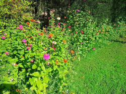 Perfilado flores silvestres