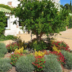 Rotonda jardín