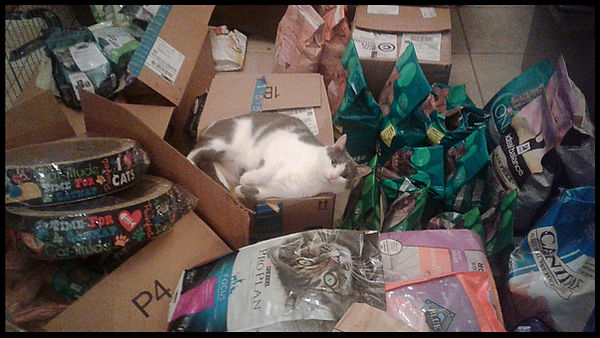 Pet Food for Ruff Patches' Rainy Day Fund