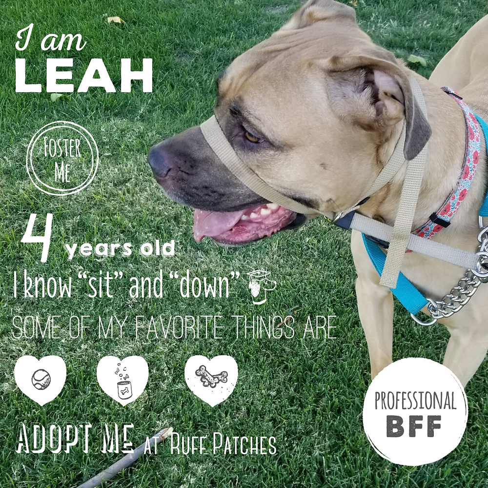 Leah loves cuddles, playing ball and tug-of-war!