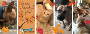 Dog and cats thankful for you!