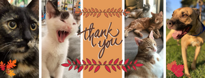 Dogs and cats saying thank you