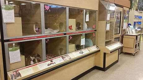 Our cat adoption area at Petsmart