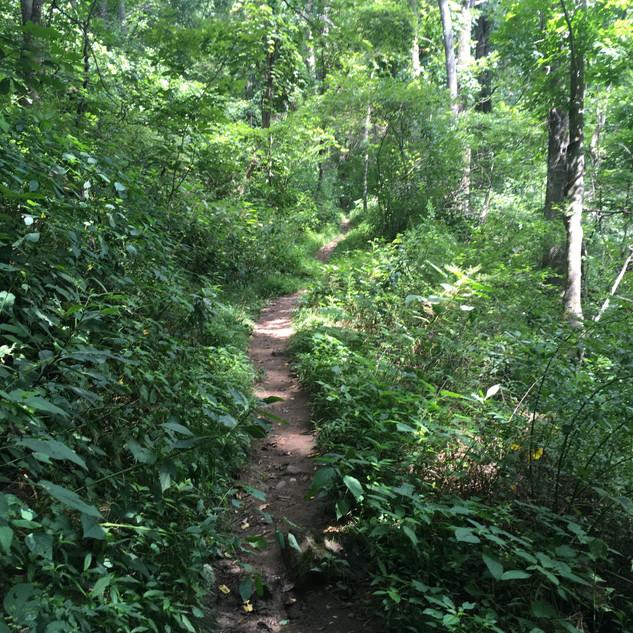 Craven Gap Trail / Blue Ridge Parkway NC