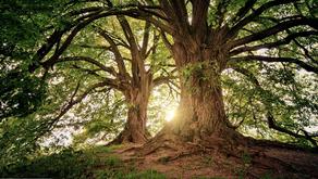 CORONAVIRUS CARE :: HUG A TREE – IT'S GOOD FOR YOU!