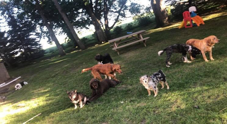 Toy Aussies for sale, Aussiedoodle puppiesAussies for sale, Aussiedoodle puppies
