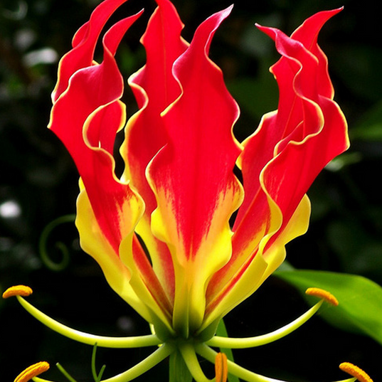 red yellow flower.png