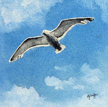 Seabird I've Seen You Flying