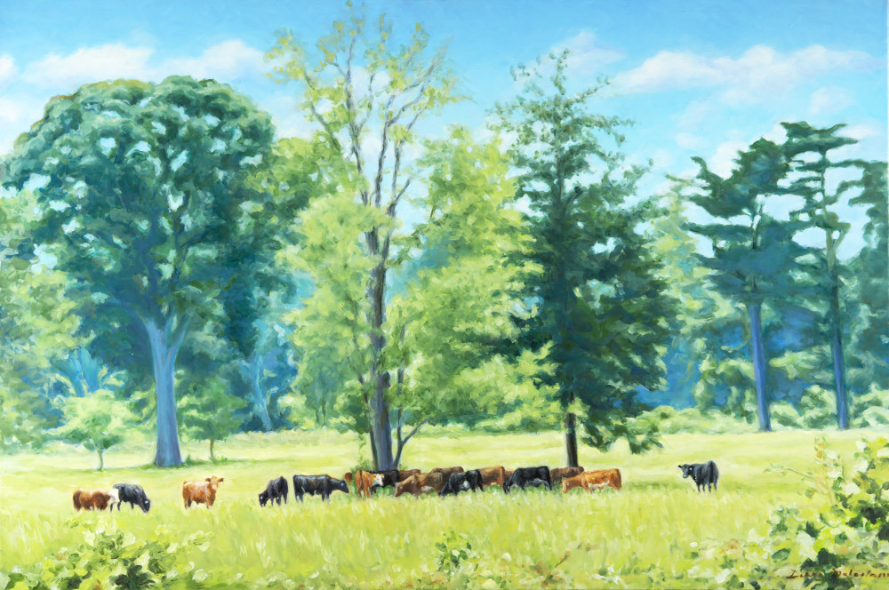 Cattle under the Trees in Sylvester Manor